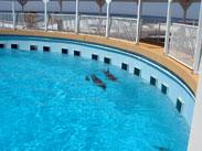 Florida's Gulfarium
