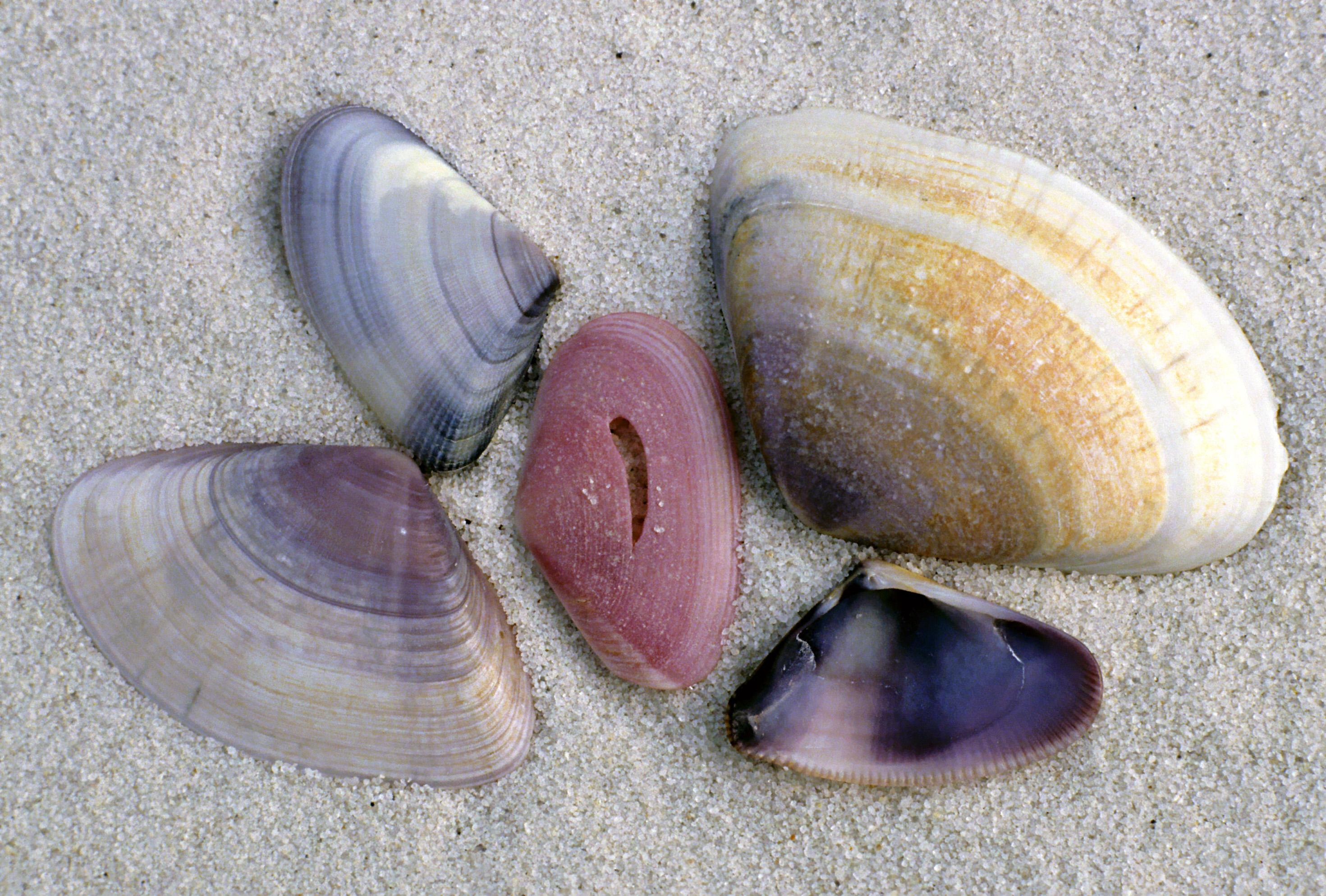 Shell and sand swap