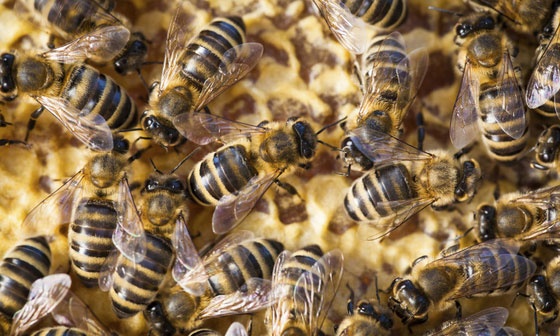 International Conference Focuses on Pollinator Research Focus