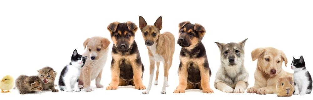 Mississippi Veterinary Medical Association