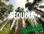 Partners in the Parks: Sequoia National Park