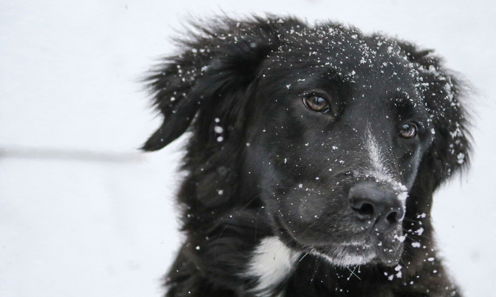 Pet Care Articles Winter Pet Care