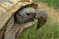 Gopher Tortoise Survey at Bullfrog Creek - Sun City Center Friday 02/24