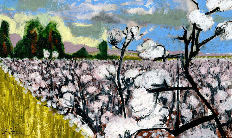 Mississippi Cotton Field