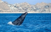 WLF 2020 Social | Whale Watching Tour - Tues., 2/11