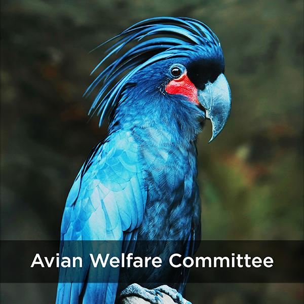 avian welfare