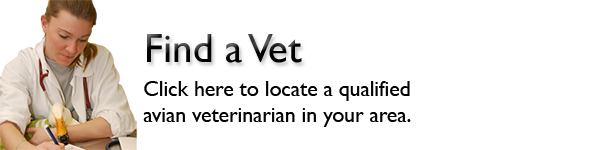 Bird Health Exam Association Of Avian Veterinarians