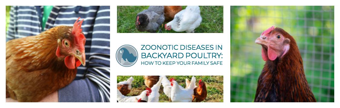 Zoonotic Diseases in Backyard Poultry - Association of Avian