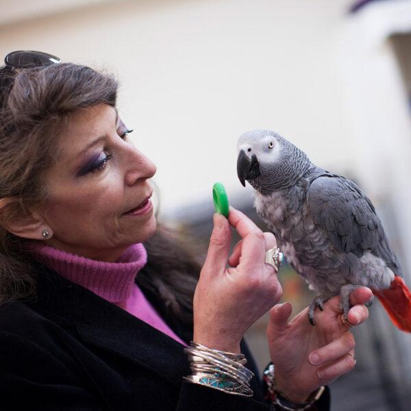 Parrot Cognition