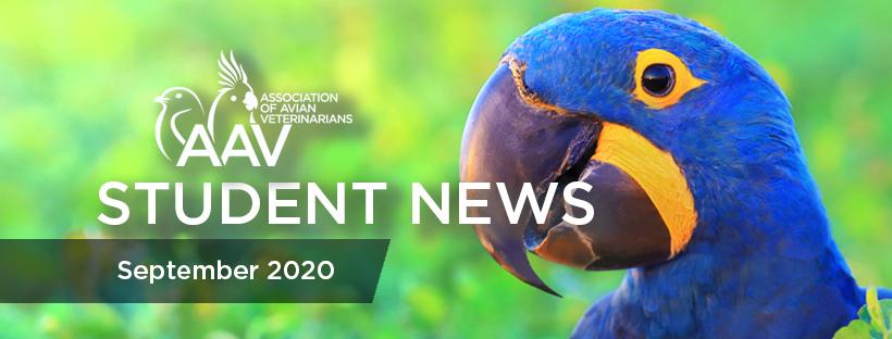 AAV Student News