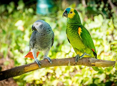 Association of Avian Veterinarians