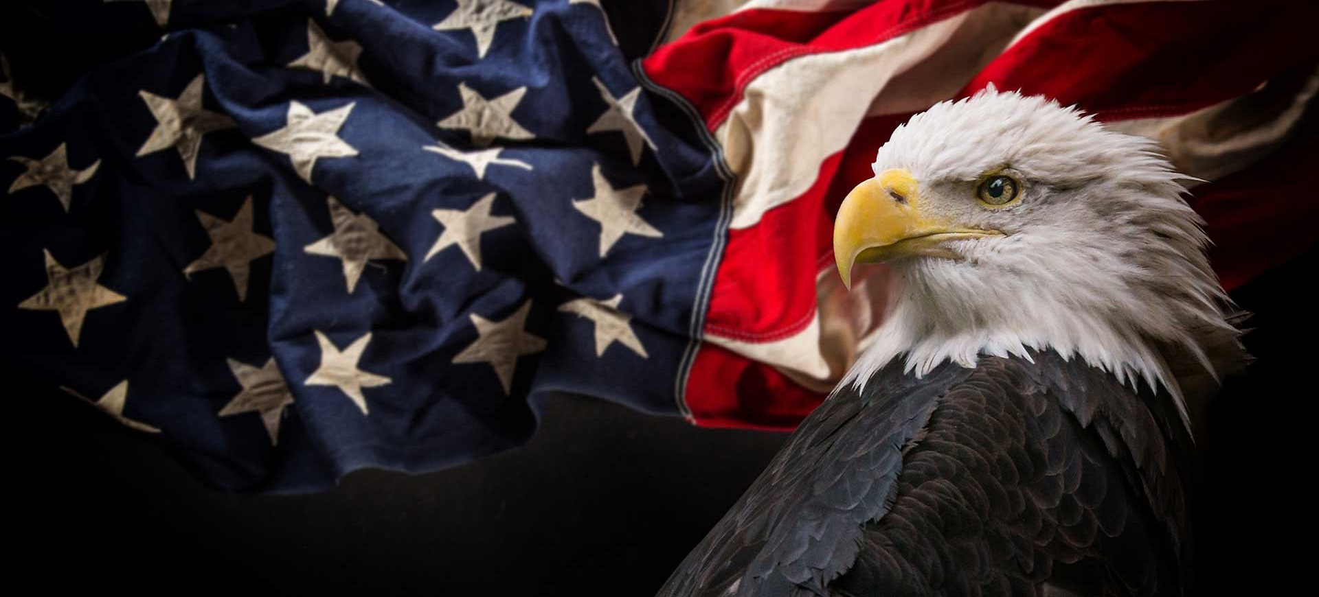 American Flag with Bald Eagle homepage slider image