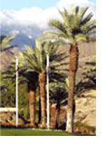 1999 - Rancho Mirage