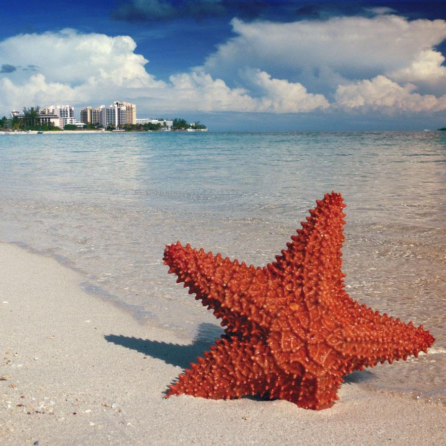 Starfish in Nassau