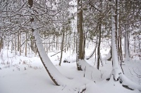 Ecology and Physiology of Plants in Winter: Surviving the Big Chill