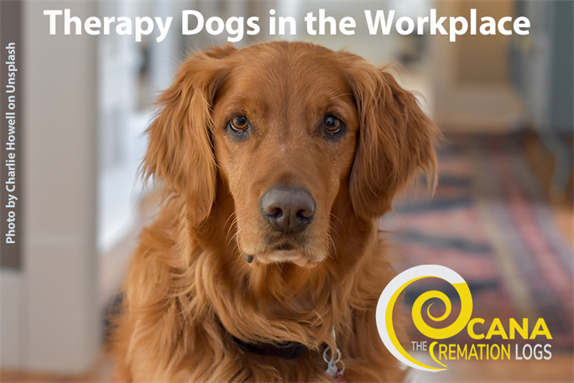 Therapy Dogs in the Workplace