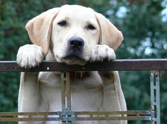 American College of Veterinary Behaviorists