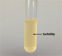 03/08/13 Turbidity Measurement: Just the Facts WEBINAR IEPA#6803