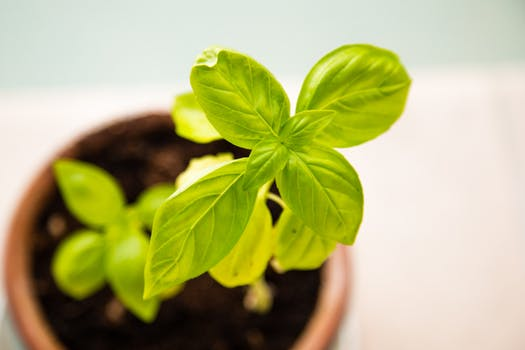 Picture of Young Plant Sprouting