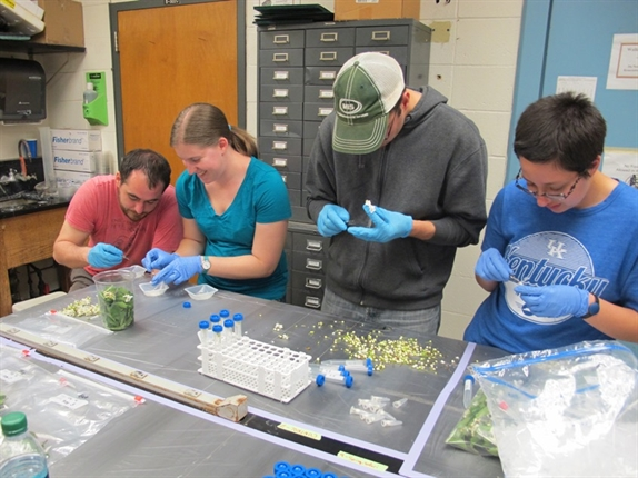 Team working to remove anthers with pollen