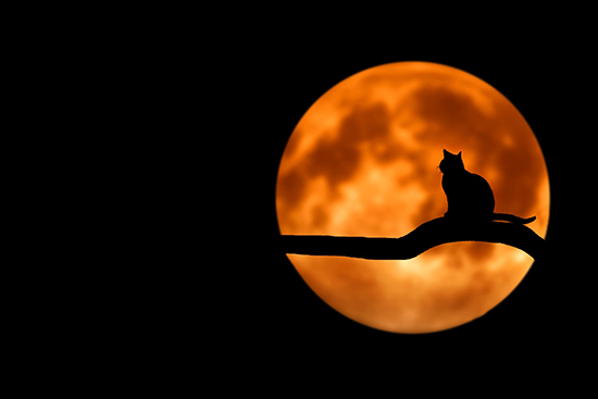 Halloween cat and moon