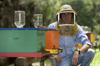 Webinar: Are Honey Bees Really Dying?