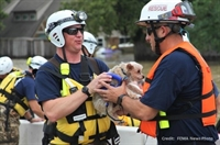 MVMA & MU CVM's Emergency Pet Sheltering: Basic Practices, Common Issues, Lessons Learned
