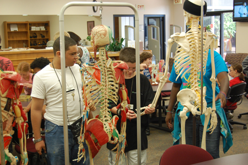 Skeletons at the OSU Center for Health Sciences Library