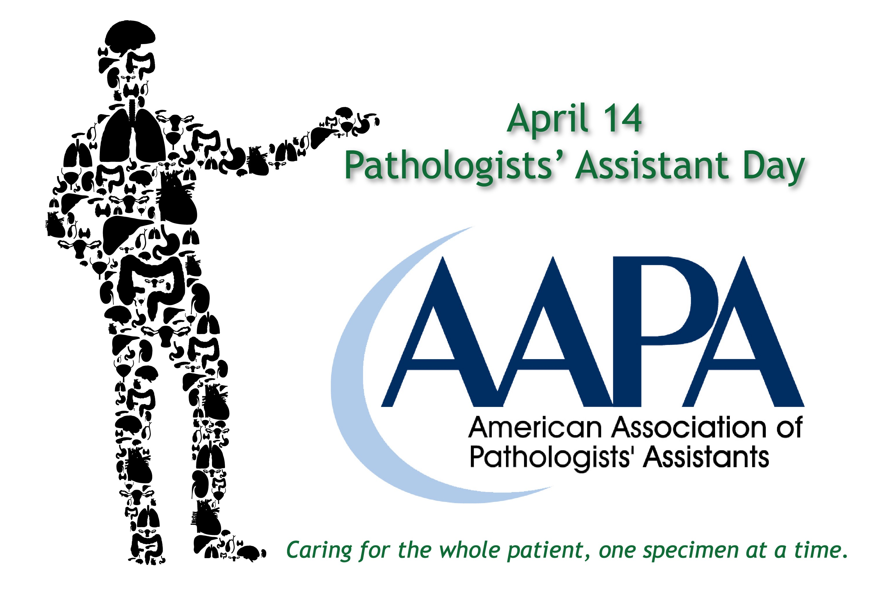 American Association of Pathologists' Assistants (AAPA)