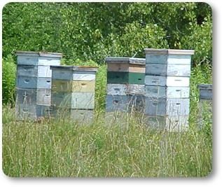 Pollinator Bee Hives