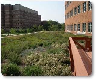 Green Roof Forest Resources Building, Penn State