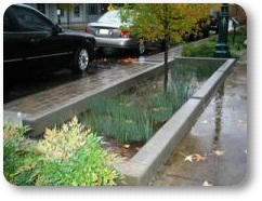 Stormwater Retention Gardens