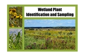 Wetland Plant Identification and Sampling