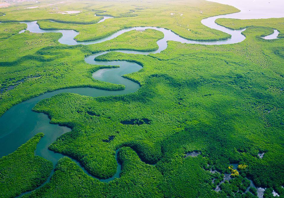 aerial view of Mangrove forest in Africa