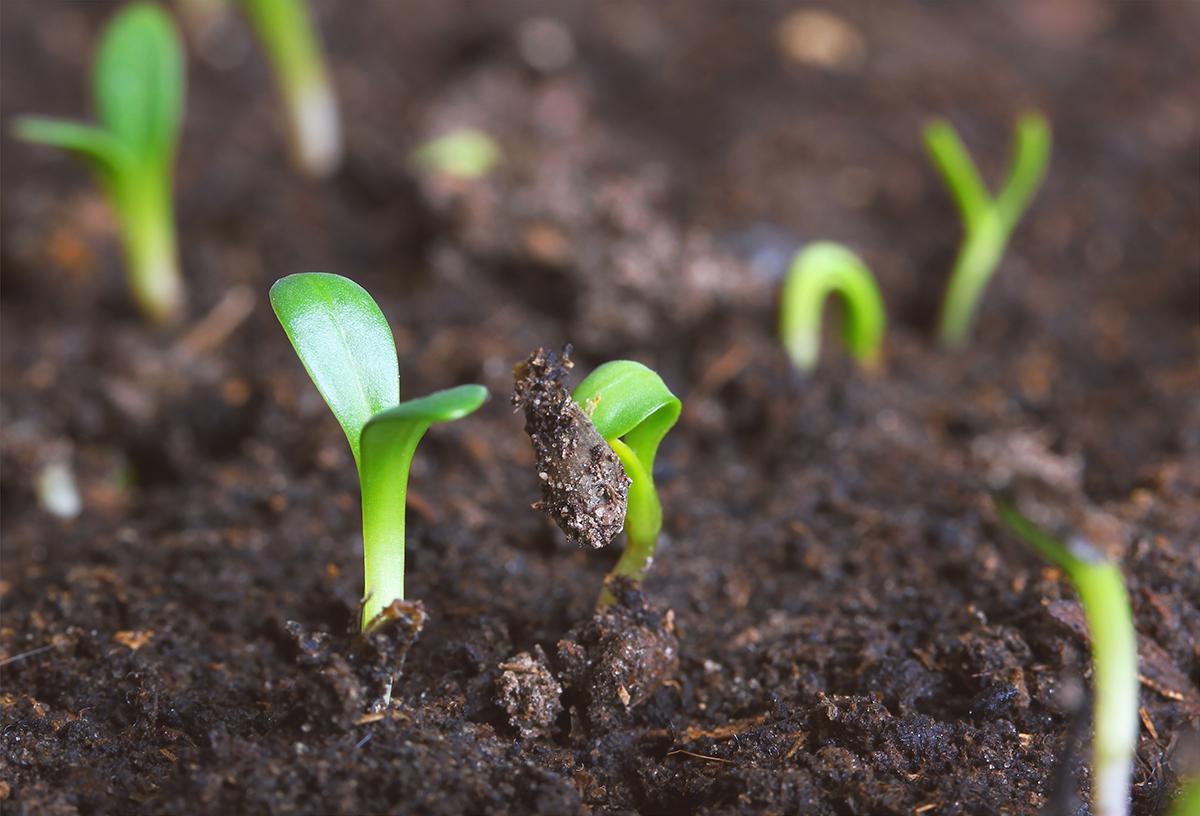 Soil biodiversity