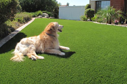 Synthetic Turf Pet Turf