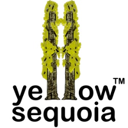 Yellow Sequoia